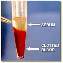blood serum magnesium