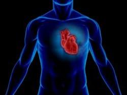 cardiovascular disease and magnesium news